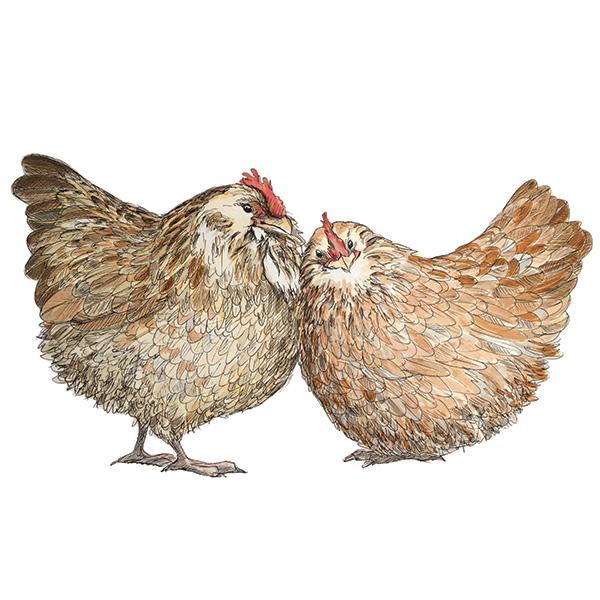 chicken hen giclee print